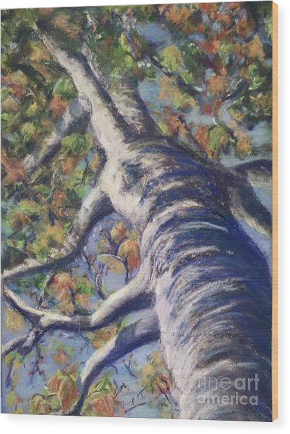 Looking Up - Fall Wood Print