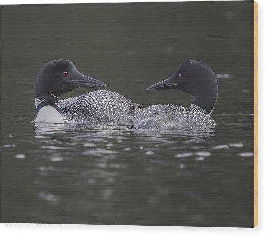 Loon Pair Wood Print