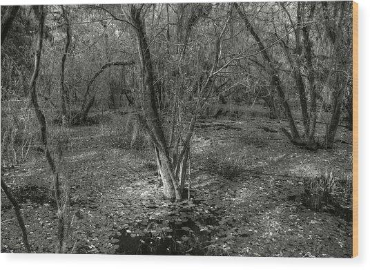 Loop Road Swamp #3 Wood Print