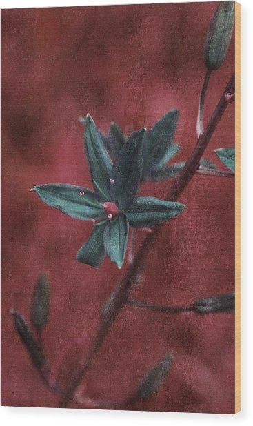 Lost Among Weeds Wood Print
