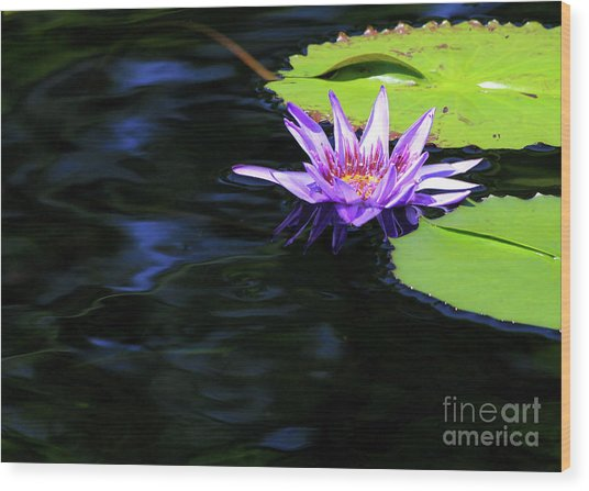 Lotus And Dark Water Refection Wood Print