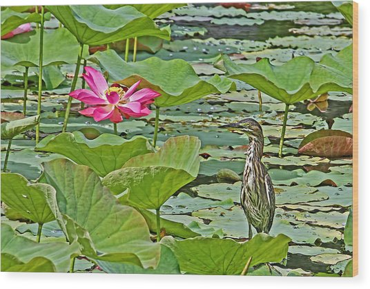 Lotus Blossom And Heron Wood Print