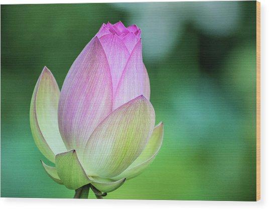Lotus Bud Wood Print