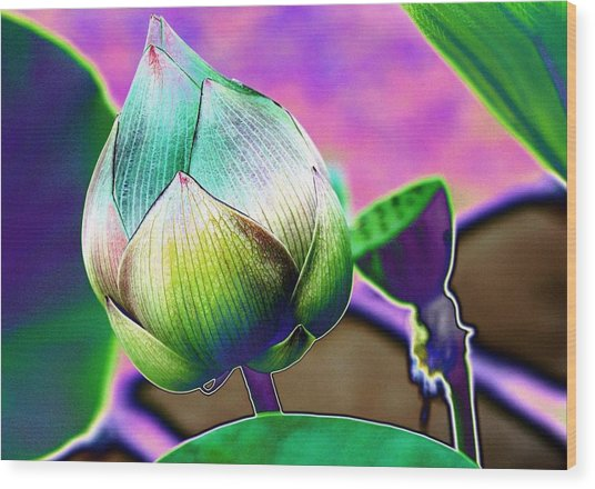 Lotus Dreaming 8 Wood Print