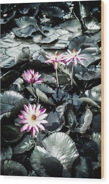 Lotus Flowers Wood Print