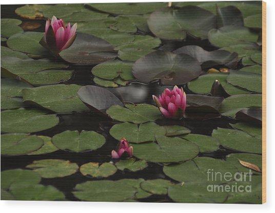 Lotus II Wood Print