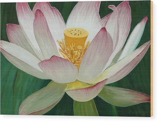Lotus Of Awakening Wood Print by Allan OMarra