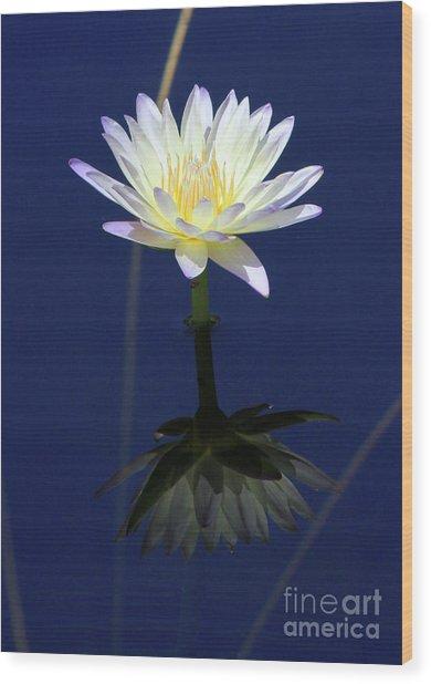 Lotus Reflection Wood Print