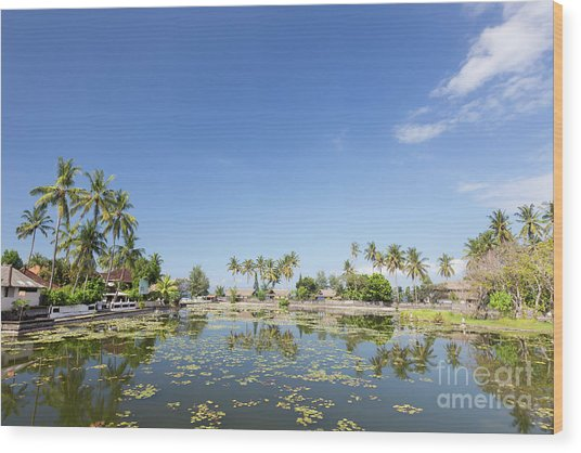 Lotus Water Lilies Growing In The Lagoon At Candidasa, Bali, Ind Wood Print by Roberto Morgenthaler