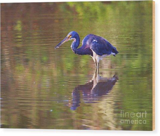 Louisiana Heron Wood Print