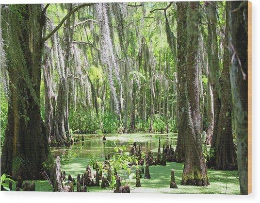 Louisiana Swamp Wood Print