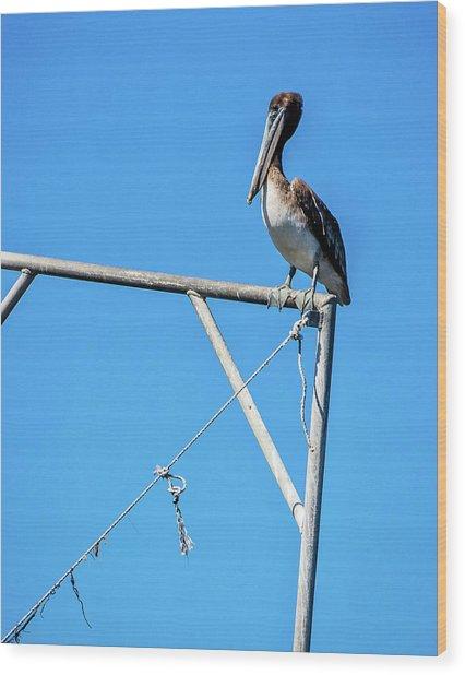 Louisiana's State Bird Wood Print