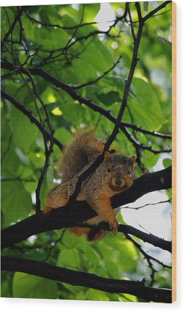 Lounge Squirrel Wood Print by Martin Morehead