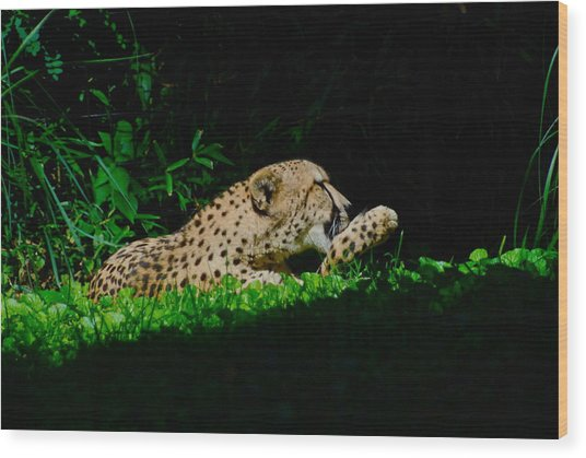 Lounging Cat Wood Print by Gene Sizemore