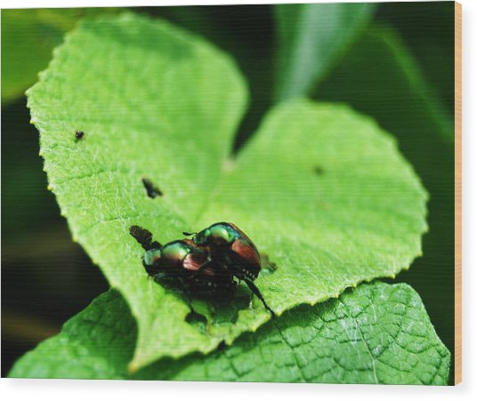Love Bugs Wood Print