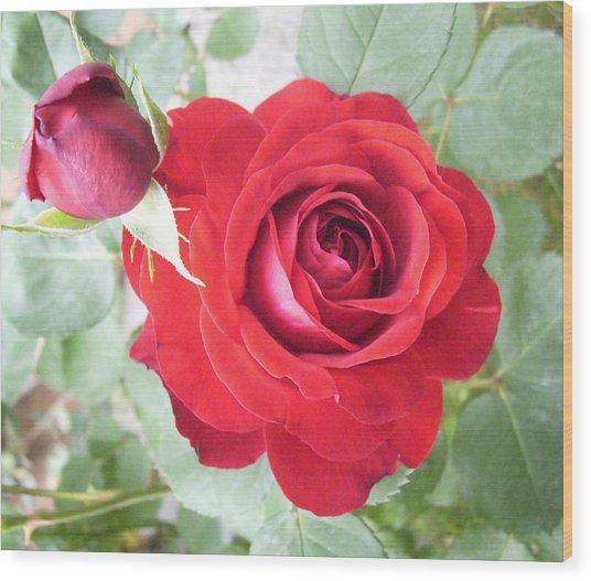 Love Roses Wood Print by Lisa Roy