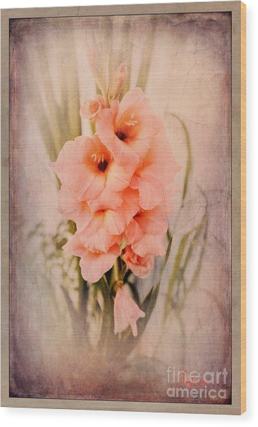 Lovely Gladiolus Wood Print