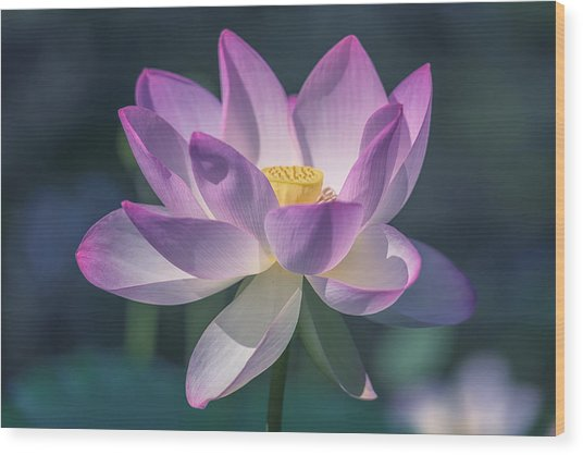 Lovely Lotus Wood Print