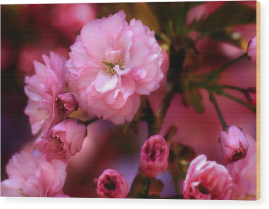 Lovely Spring Pink Cherry Blossoms Wood Print