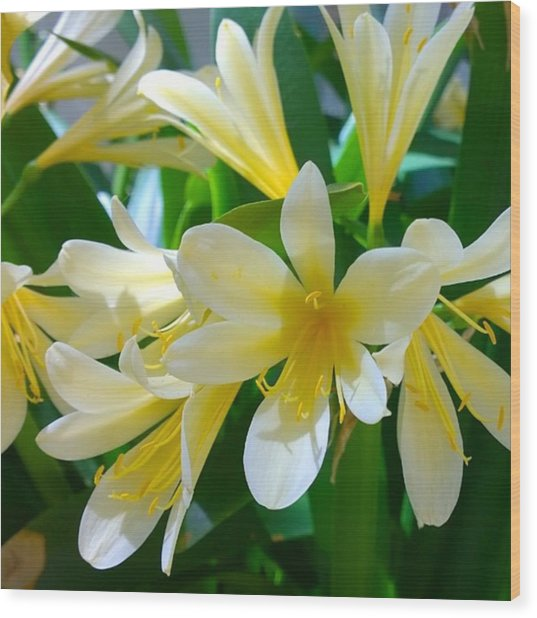 Lovely White And Yellow #flowers Wood Print