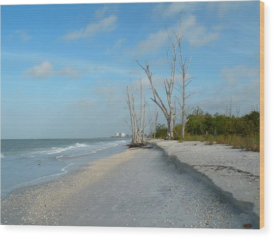 Lovers Key Beach Wood Print by Rosalie Scanlon