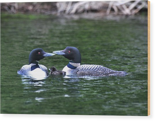 Loving Loon Parents Wood Print