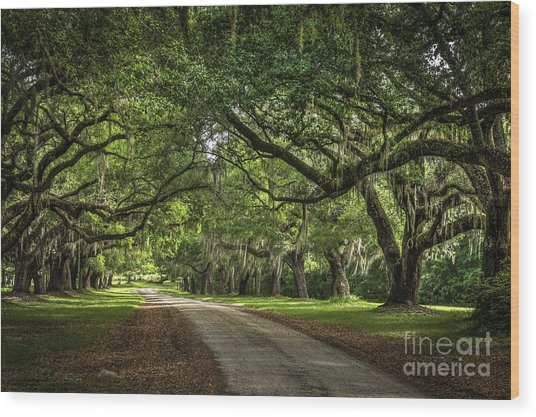Low Country Live Oak Wood Print