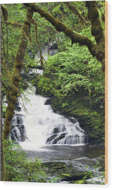Lower Lunch Creek Falls Wood Print