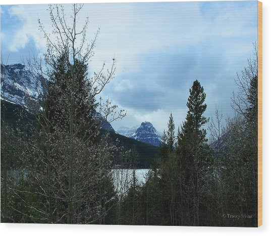 Lower Two Med Lake Through The Trees Wood Print