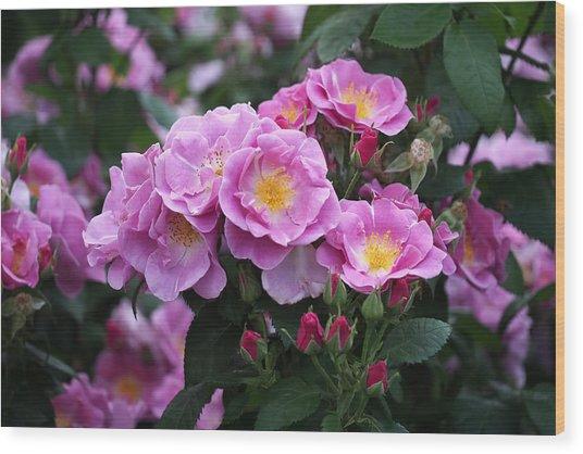 Lucky Floribunda Roses Wood Print