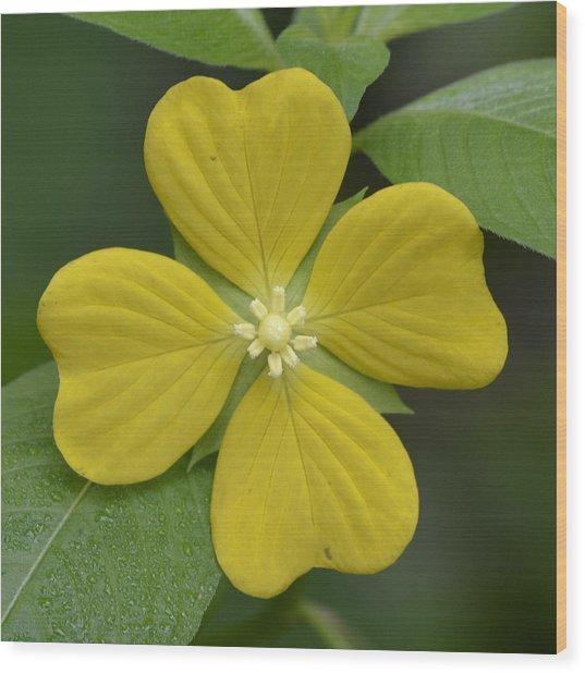 Lucky Four Leaf Flower Wood Print