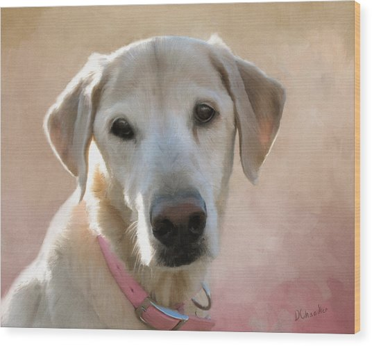 Lucy In Pink Wood Print