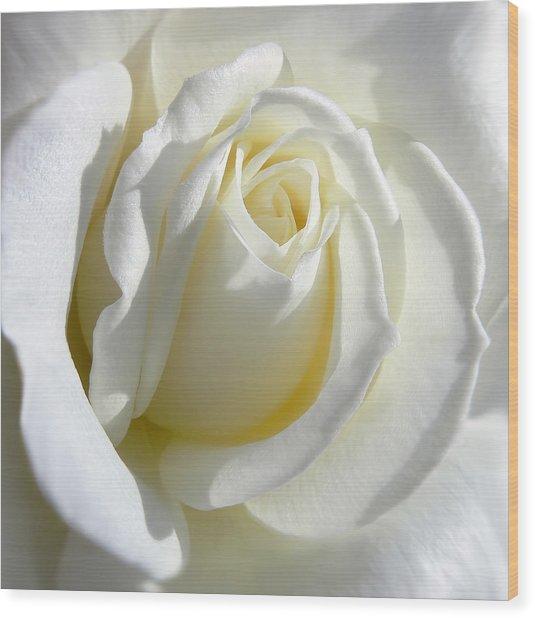 Luminous Ivory Rose Wood Print