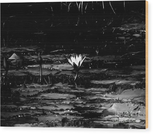 Luminous Water Lily  Wood Print