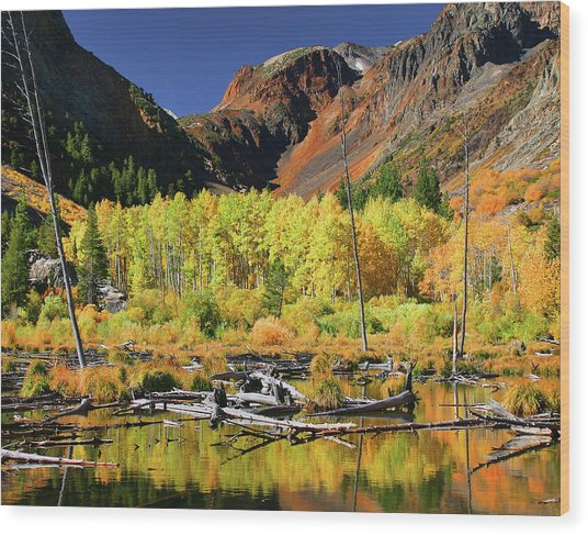 Lundy Canyon Beaver Pond Wood Print by Tom Kidd