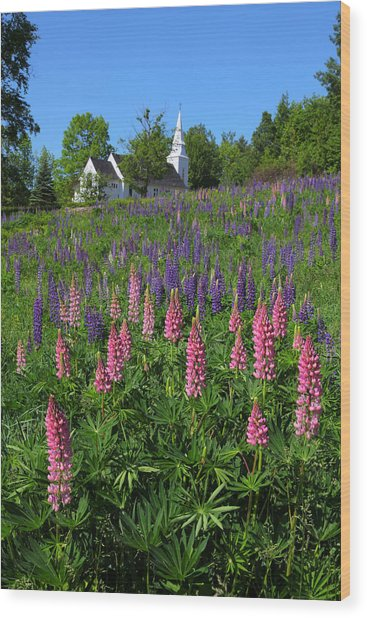 Lupin Church Wood Print