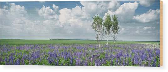 Wood Print featuring the photograph Lupine Blooming. Rohizky, 2015. by Andriy Maykovskyi