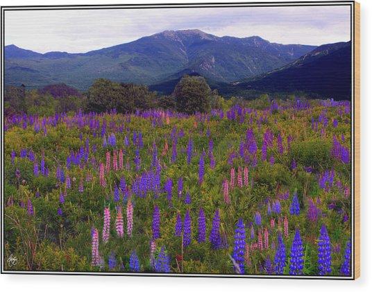 Lupine Field In Franconia Range Wood Print