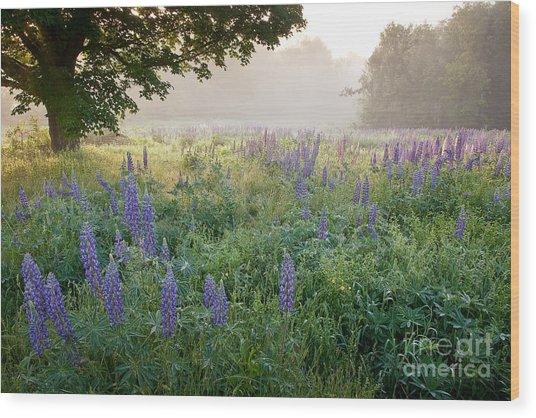 Lupine Field Wood Print