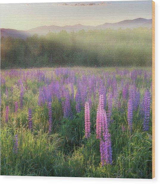 Lupine Morning Fog Square Wood Print