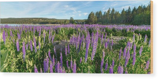 Lupines At Lake Tahoe Wood Print