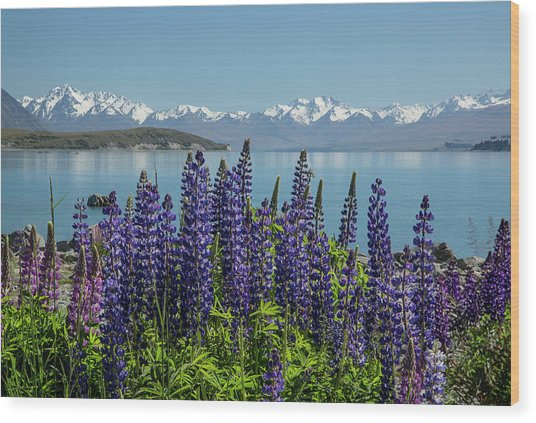 Lupines At Lake Tekapo Wood Print