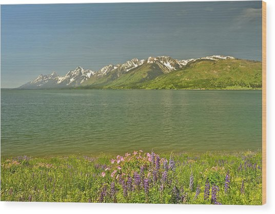 Lupines In The Tetons Wood Print