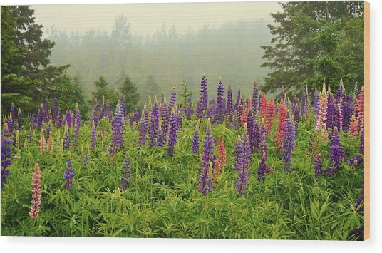 Lupins In The Mist Wood Print