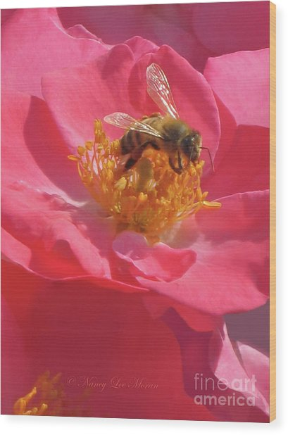 Luscious Rose With A Bee Wood Print