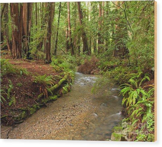 Lush Redwood Forest Wood Print by Matt Tilghman