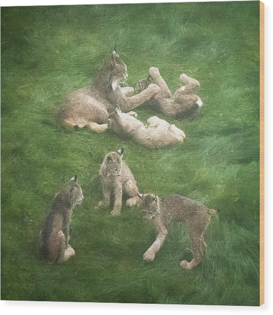 Lynx In The Mist Wood Print