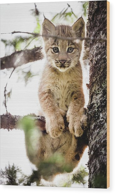 Lynx Kitten In Tree Wood Print