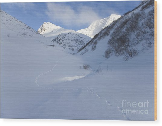 Lynx Tracks In A Mountain Pass Wood Print by Tim Grams