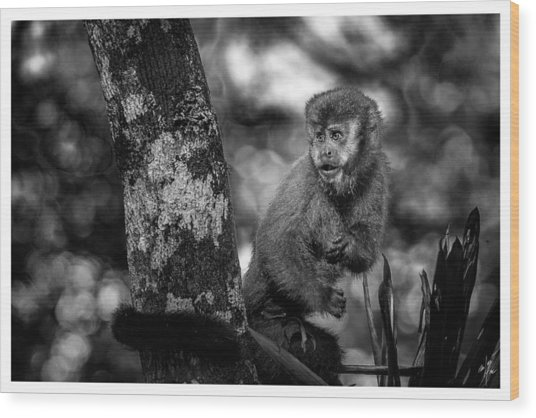 Macaco Prego II Wood Print